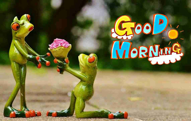very funny good morning image of cute frog purposing