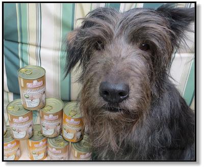 fettarmes Hundefutter ist sehr gut verträglich für Hunde mit sensiblem Magen oder für Hunde mit einer Bauchspeicheldrüsenerkrankung