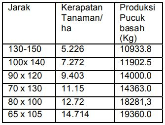 Tabel Produksi pucuk basah pada berbagai tingkat jarak tanam
