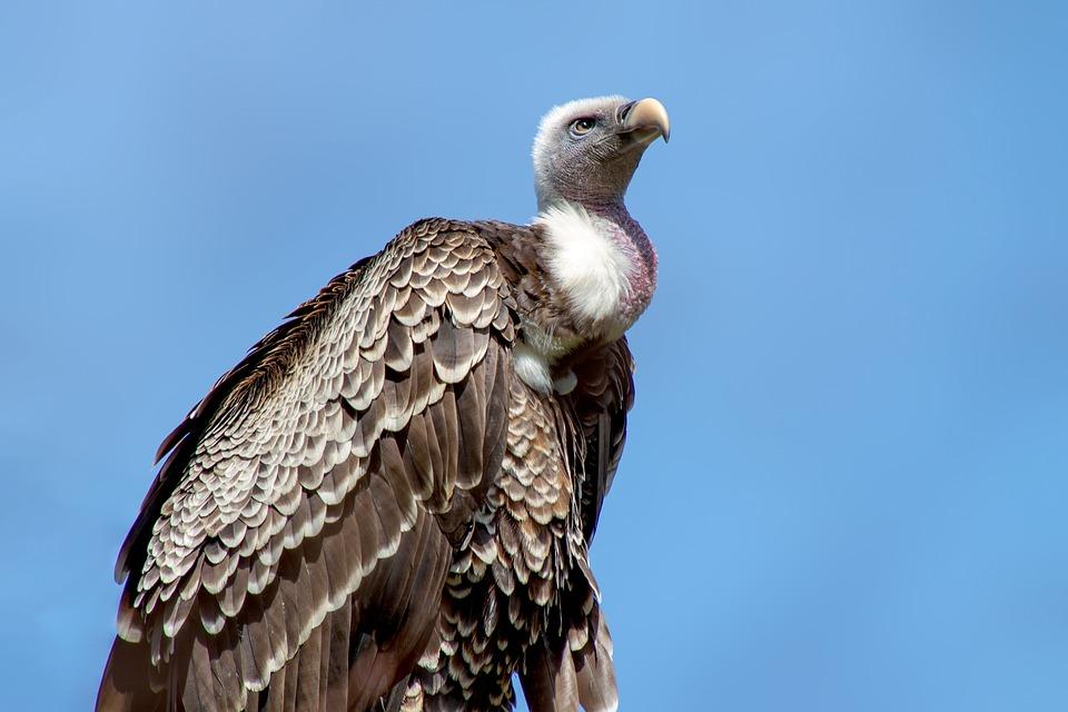 दुनिया के कुछ विलुप्त पक्षी | Extinct Birds Facts in Hindi