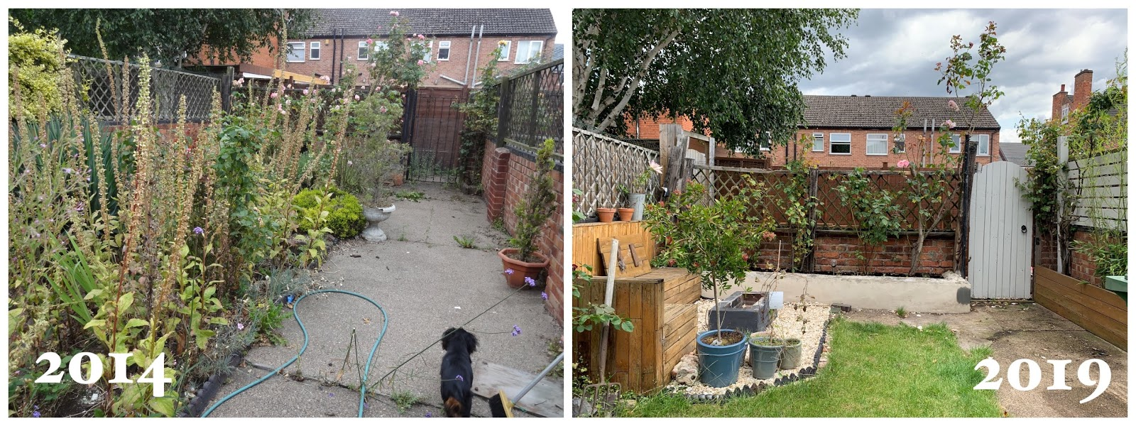 garden renovation before and after 5 years