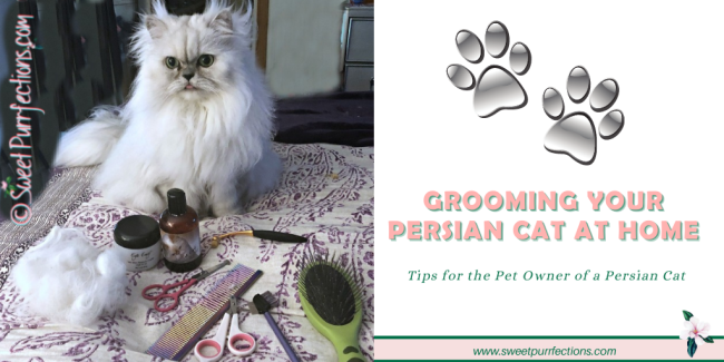 graphic of Persian cat with grooming tools