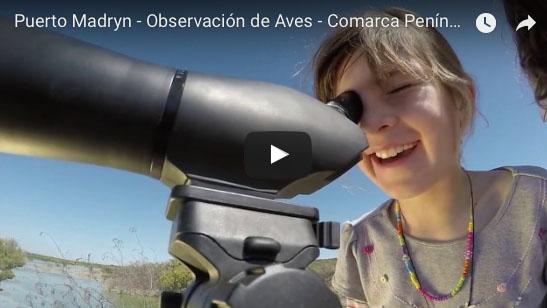 Avistaje de aves en La comarca Virch Valdes Peninsula Valdes