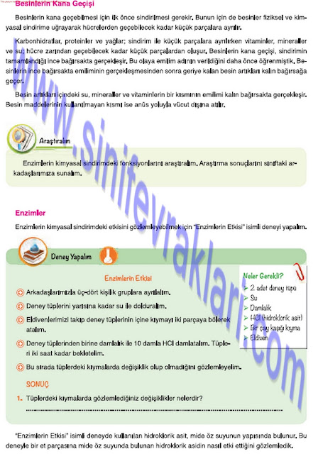 7. Sınıf Fen Bilimleri Mevsim Yayınları Ders Kitabı Cevapları Sayfa 19