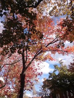 Feuilles colorées d'automne