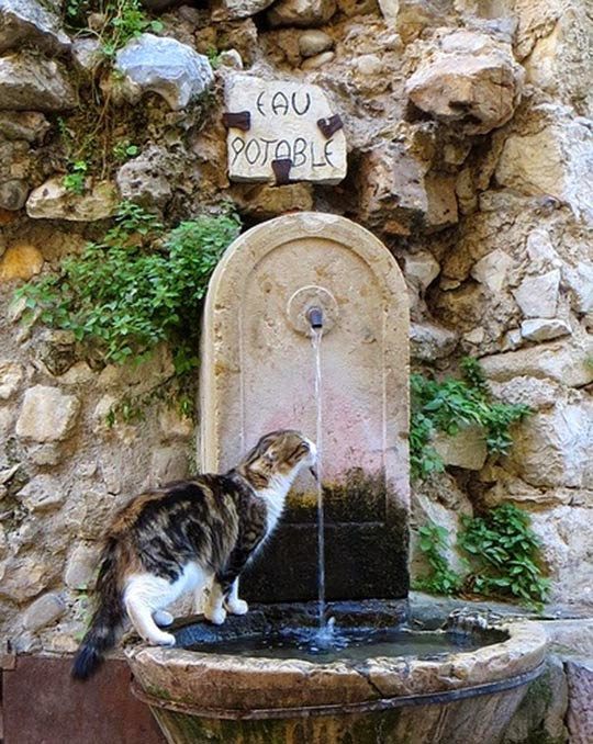 cat drinking from fountain