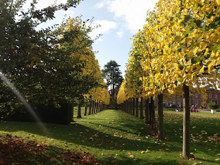 Photo of the avenue of trees in autumn at Erddig Hall, Wrexham