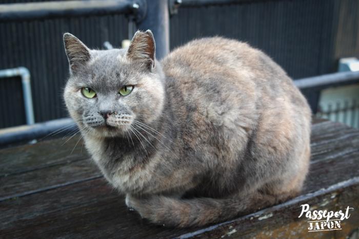 Chat gris, Teramachi, Nagasaki