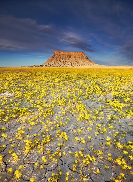 mar de flores amarillas en el desierto de Utah