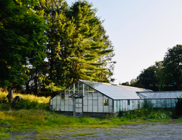 Greenhouse - Cold Spring, NY  _ Ms. Toody Goo Shoes
