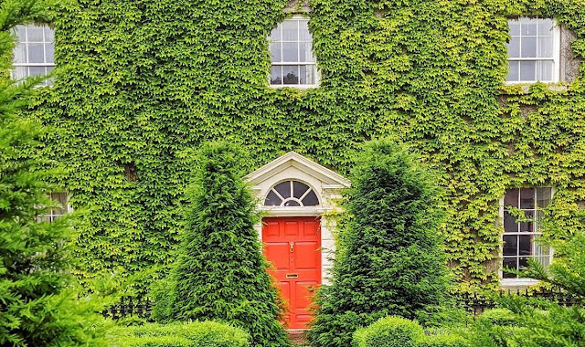 Orange door covered in ivy in Kildare Town