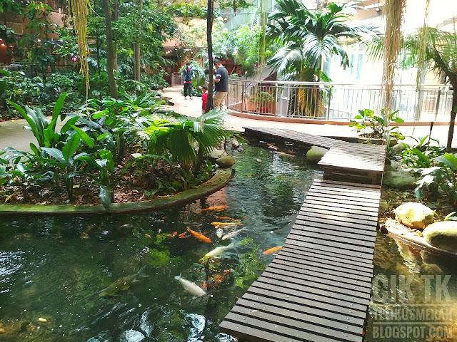 kolam ikan dan kura-kura