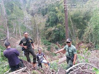 Terbukti Hasil Illegal Logging, Polhut - Polisi Temukan 20 Tunggul di HL