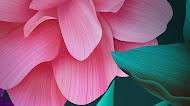 Magenta flower huawei blue 3d mobile wallpaper