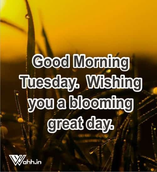 Happy-Morning-Tuesday