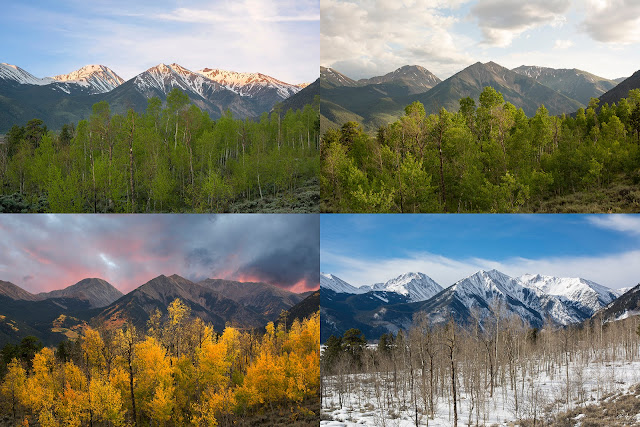Fall Summer Winter and Spring with the Sawatch Mountains of Colorado