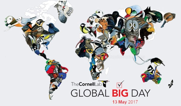 Global Big Day 2017