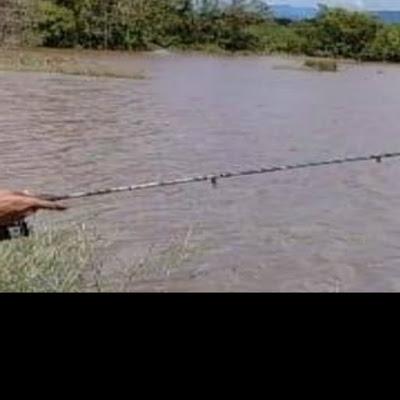 Bulan Juni, Juli dan Agustus merupakan bulan dimana ikan-ikan besar di sungai keluar dan akan memakan umpan pancingan. Terkadang, mulai bulan Mei sudah banyak pemancing sungai yang menaikan ikan besar dengan ukuran di atas 3 kiloan