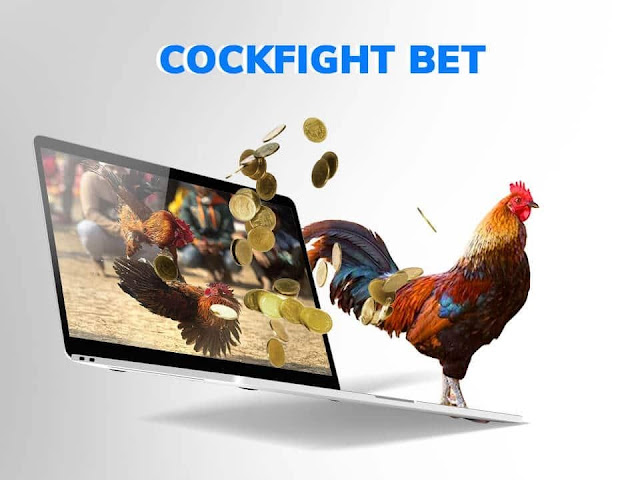 Ways to Improve Your Odds of Winning an Online Cockfight Bet
