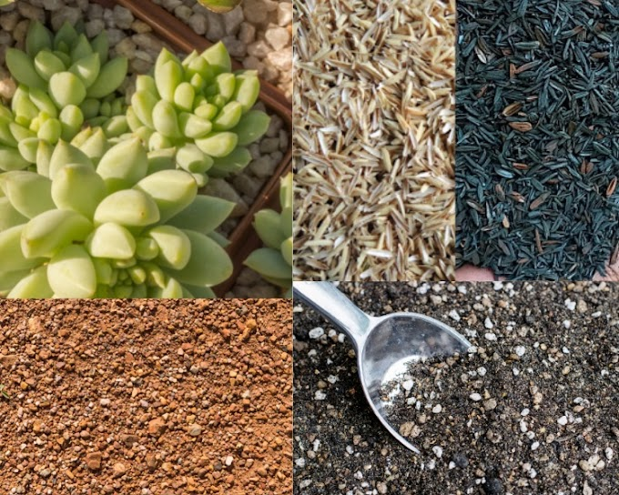 Succulents Soil Mix DIY for Indoor Grower  from Orchidshade