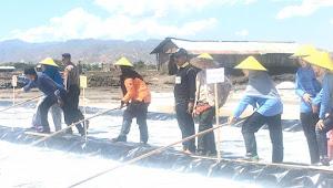 Bupati Tinjau Sejumlah Proyek Hingga Panen Garam