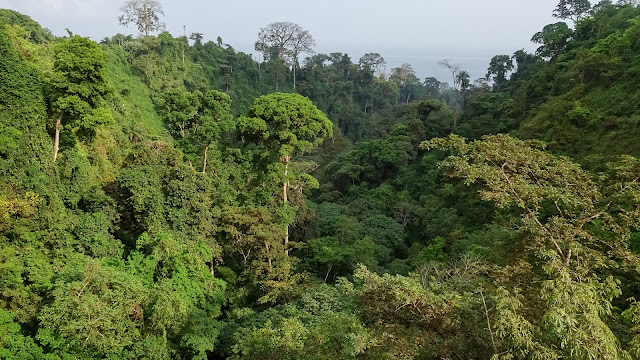 Untouched jungle has many boas and rats