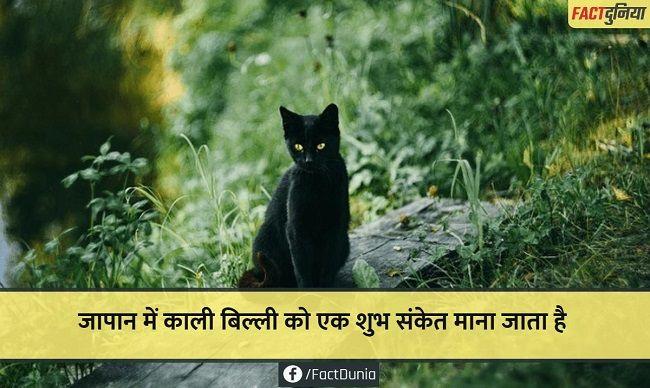 black-cat-fact-hindi