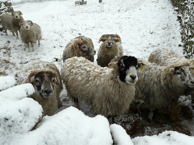 Snowy sheep - www.winwickmum.co.uk