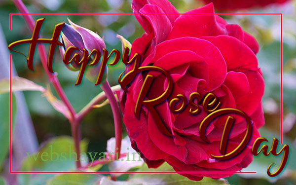 happy rose day hd