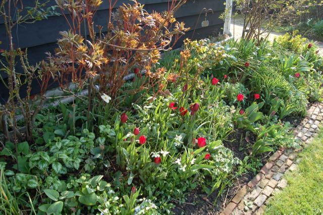 rode tulpen in de voorjaarstuin