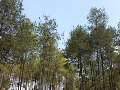 Bamboo forest in Guci Tegal Indonesia