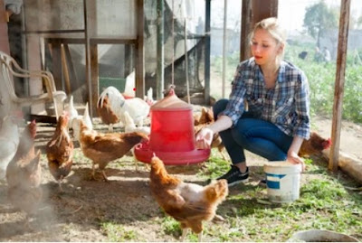 biosecurity of poultry farm