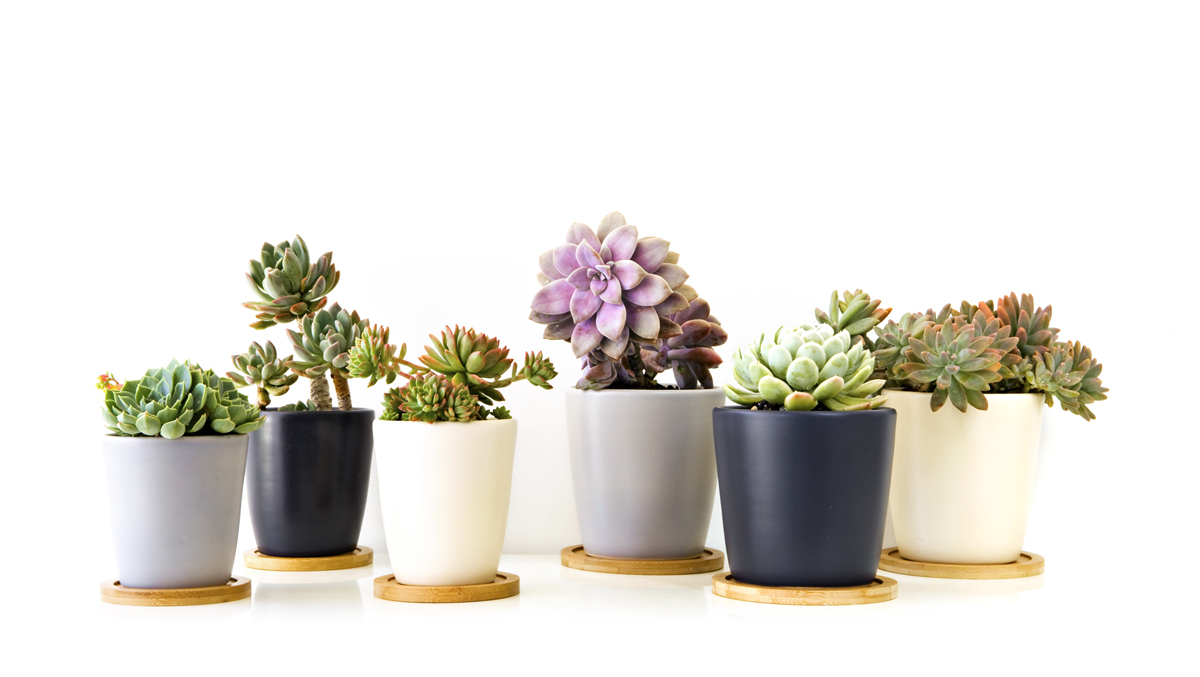 Succulents ! Home Decor