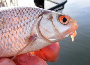 в жару рыба клюет