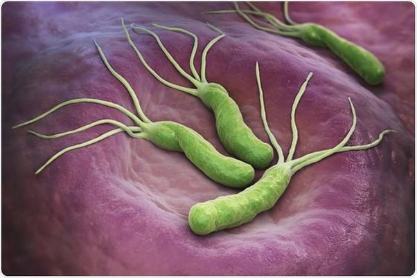Helicobacter pylori có thể tạo ra enzyme urease