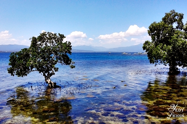 The sea and mangrove surrounding Badjao Seafront Restaurant at Puerto Princesa Palawan YedyLicious Manila Food and Travel BlogBest Restaurants in Palawan Philippines