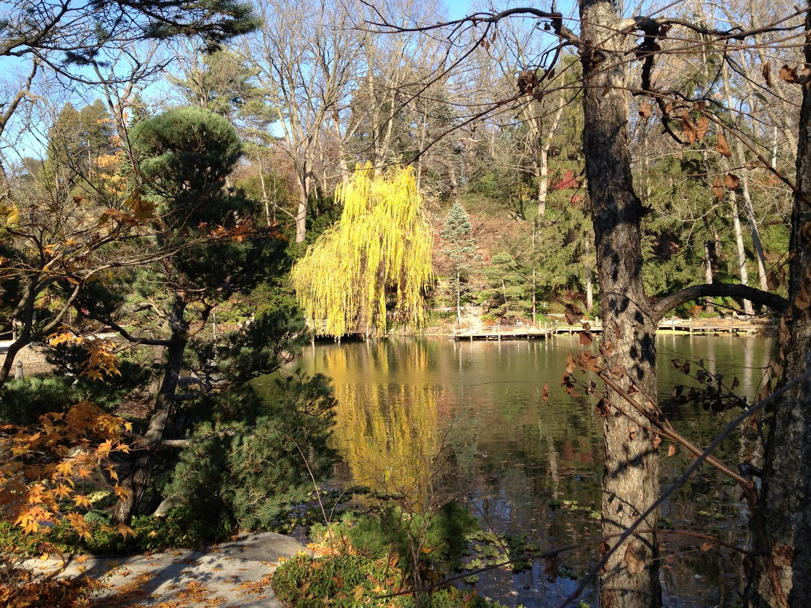 Garden of Reflection: Water, Ponds and Koi