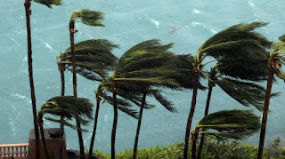filosofi kekuatan pohon kelapa diterjng badai dasyat