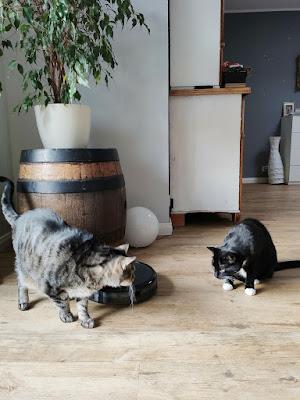 Saugroboter mit Katzen