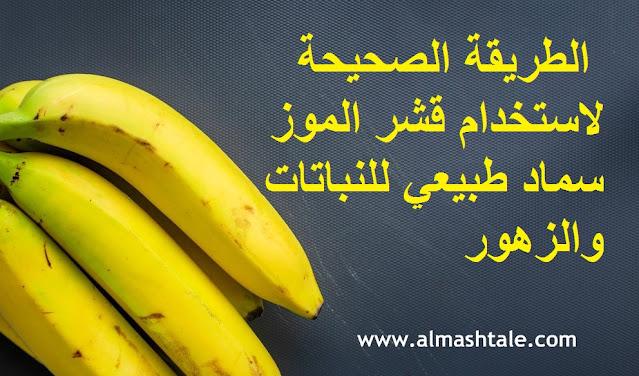استعمال قشور الموز سماد طبيعي