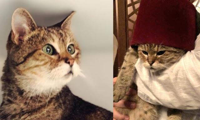 Gli, Kucing Penjaga Hagia Sophia Sudah 2 Bulan Sakit