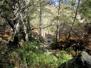 Fish Creek in autumn as seen from Fish Canyon Trail, Angeles National Forest