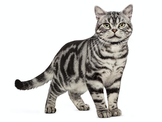 Andrew Hidayat KPK Kisah Penjual Kucing