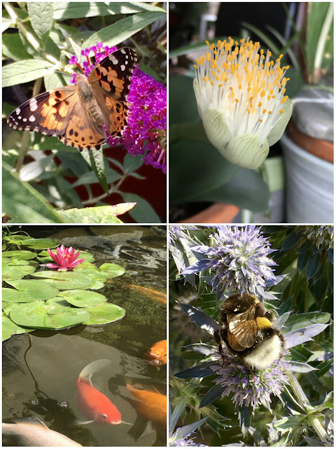 Hummel, Fische, Schmetterling und Blüten