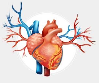 ما هو القلب