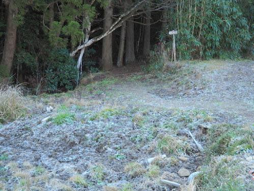 ここから樹林帯に入る