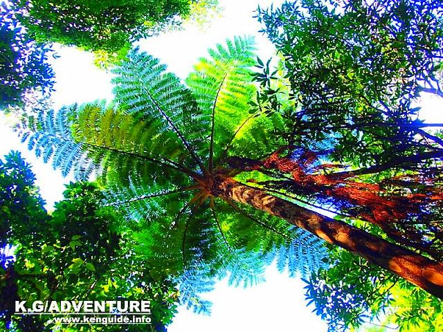 西表島でカヌー・SUP・スタンドアップパドルボード体験なら人気の西表島ケンガイドがおすすめするアクティビティツアー体験を、マングローブカヌー&ジャングル探検トレッキング滝巡り&鍾乳洞探検で遊ぼう!