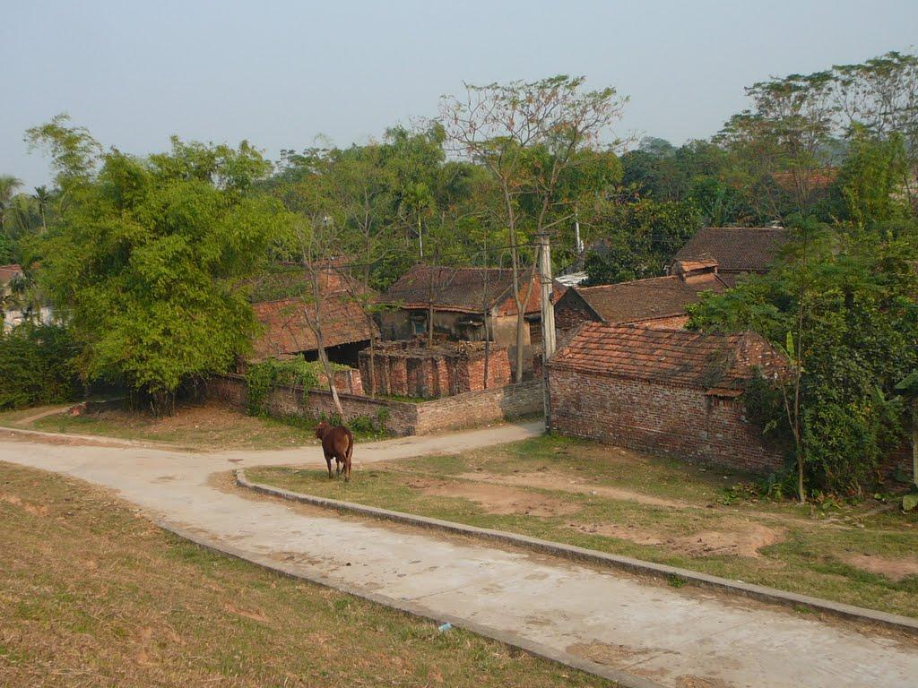 ảnh làng quê