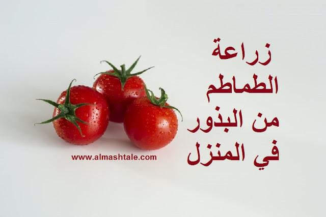 زراعة الطماطم tomatoes من البذور في المنزل