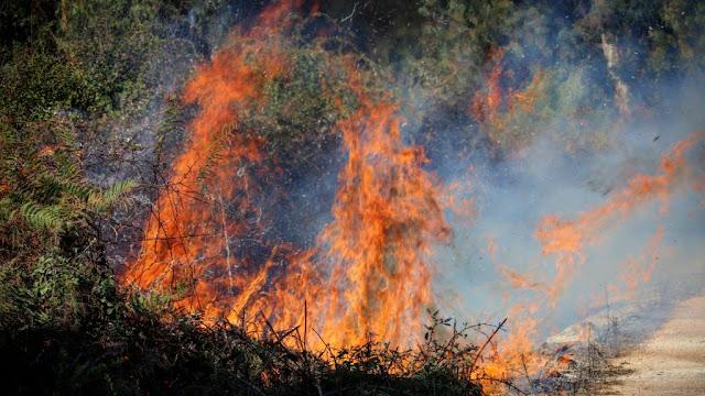 Το γεγονός ότι η Πρέβεζα είναι πρώτη σε όλη την Ήπειρο σε καμένες δασικές εκτάσεις ανέφερε κατά την διάρκεια της συνεδρίασης του Περιφερειακού Επιχειρησιακού Συντονιστικού Οργάνου Πολιτικής Προστασίας της Π.Ε. Πρέβεζας που πραγματοποιήθηκε μέσω τηλεδιάσκεψης, ο Διοικητής Πυροσβεστικών Υπηρεσιών Ηπείρου κ. Απόστολος Βασδέκης.